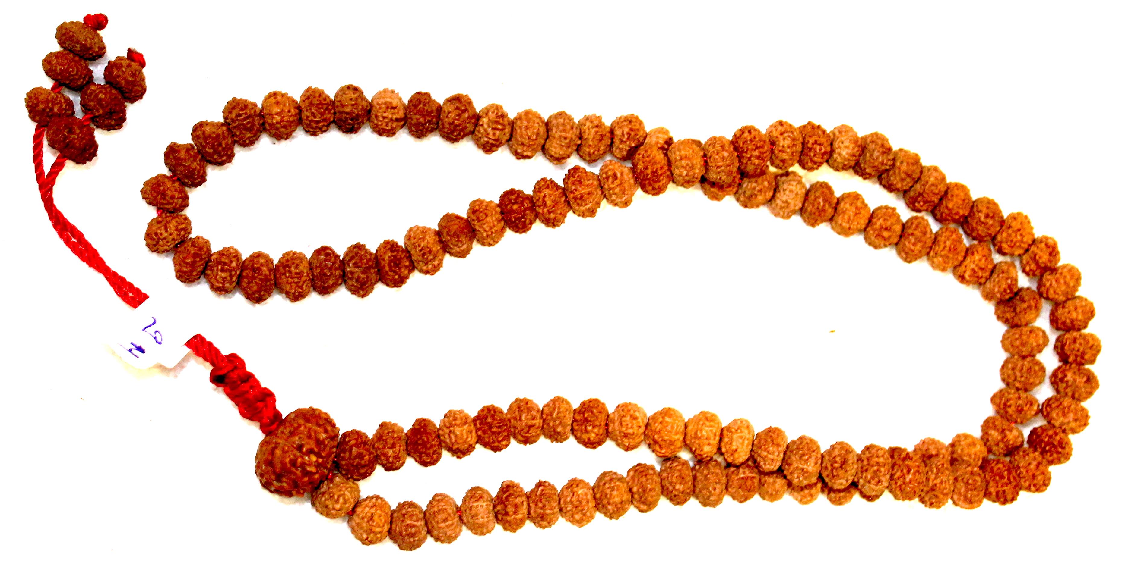 About 11 Mukhi Rudraksha